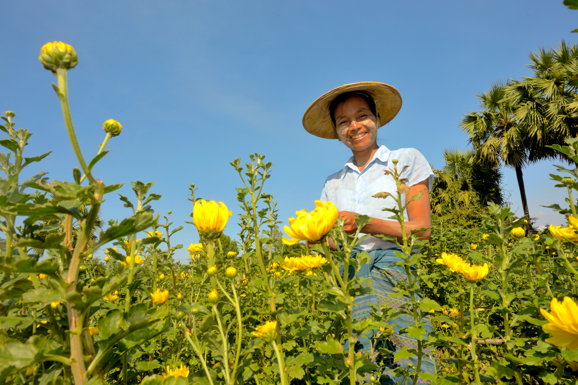 Daw Thin Thin standing in her field of Chrysanthemums that she grows for income.