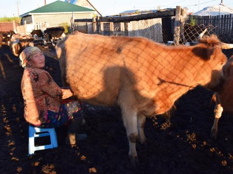 Bulgaa is mother of six and now lives with her daughter, two grandchildren and her mother in Darkhan city, Mongolia milking her dairy cows.