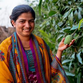 Woman touching mango on tree on her farm in India