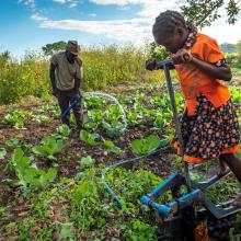 Daughter operates family's treadle pump while her stepfather waters the family's cabbage plant in Zambia.